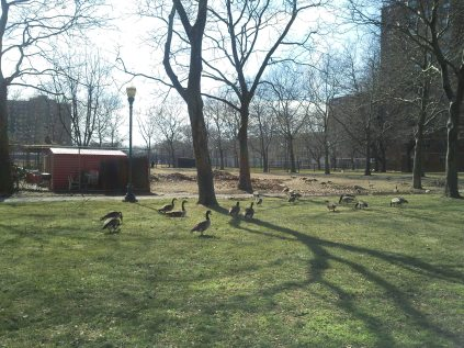 Mother Goose Birthday10(1)