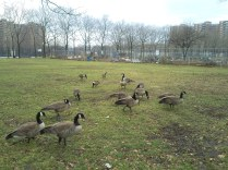 Mother Goose Birthday3(1)