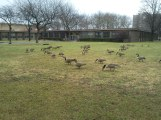 Mother Goose Birthday5