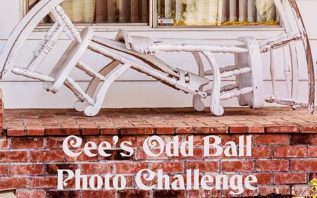 cob-banner_Oddball