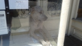 Doggie Window