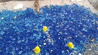 Rubber Duckie Pond