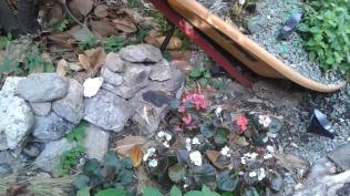 Rocks & Flowers