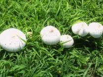 Mushrooms/Toadstools