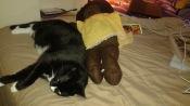 Sylvester HRH of Zen