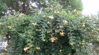 Community Garden Overhang