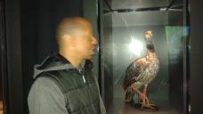 Dino Bird Check