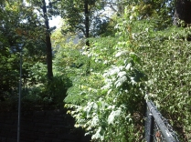 Green spaces