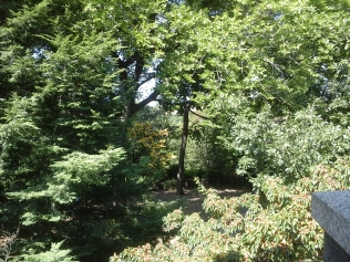 Forest, Woods, Trees, Foliage