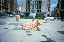 Cows on Parade 2000