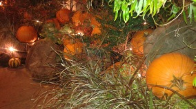lit-evening-pumpkins-night