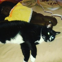 Sylvester and Doll
