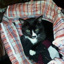Sylvester in my old Laundry Bag