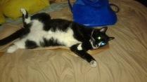 Sylvester Bright Eyes