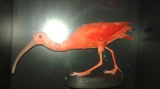 Dino Bird Orange