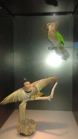 Dino Birds Two