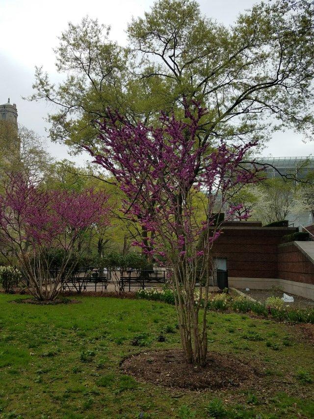 Flowers and Pink Blossom Trees – Espiritu en Fuego A Fiery Spirit
